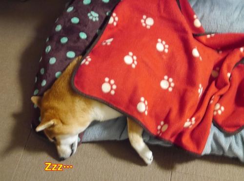 2毛布で温か