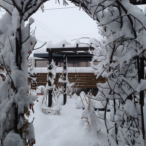 雪の庭_2015112401