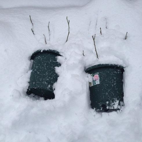 雪の庭_2015112402
