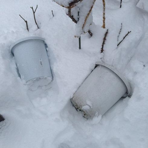 雪の庭_2015112403