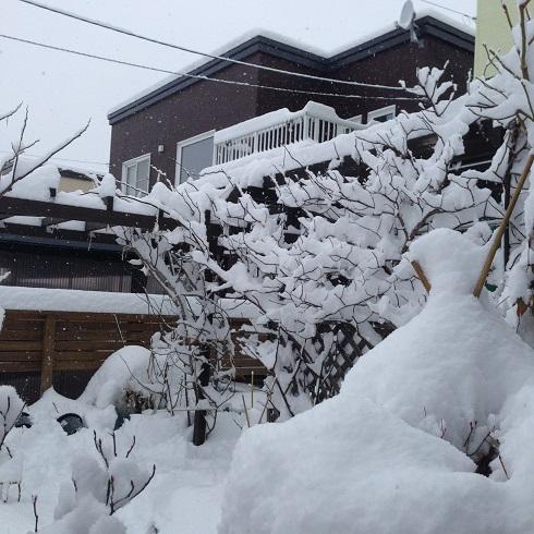 雪の庭_2015112404