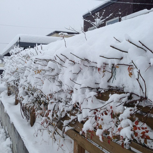 雪の庭_2015112405