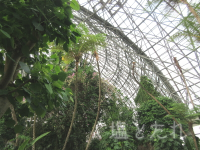 IMG_2147_20151021_01_夢の島熱帯植物館