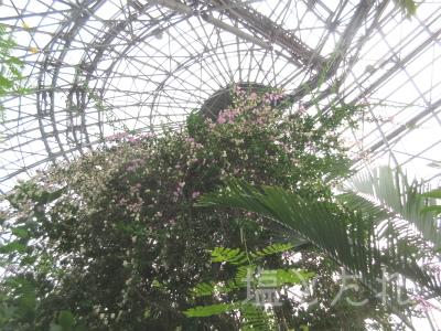 IMG_2156_20151021_01_夢の島熱帯植物館