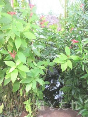 IMG_2158_20151021_01_夢の島熱帯植物館