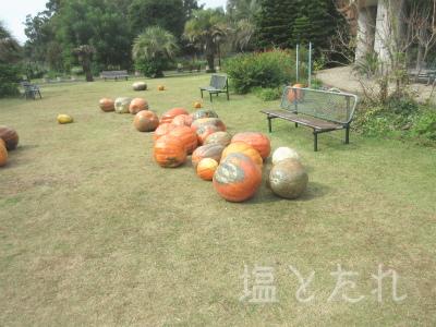 IMG_2173_20151021_01_夢の島熱帯植物館