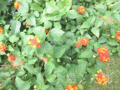IMG_2178_20151021_01_夢の島熱帯植物館