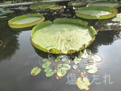 IMG_2187_20151021_01_夢の島熱帯植物館