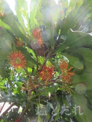 IMG_2194_20151021_01_夢の島熱帯植物館