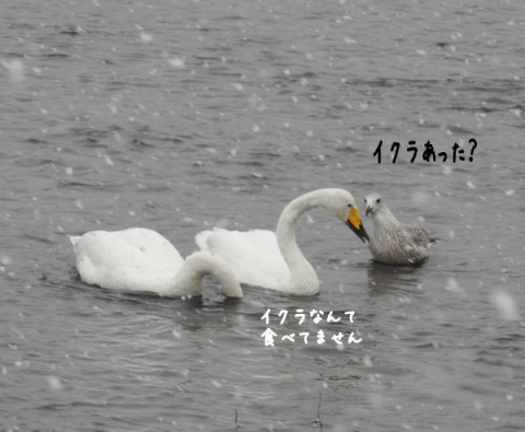20151110kawa8.jpg