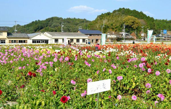 10,23佐曽利ダリア園-2