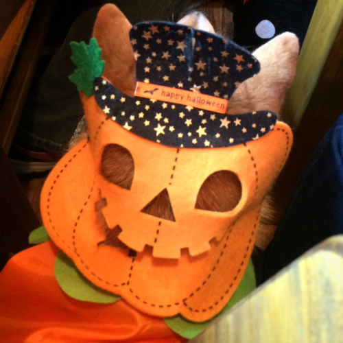 かぼちゃはなび