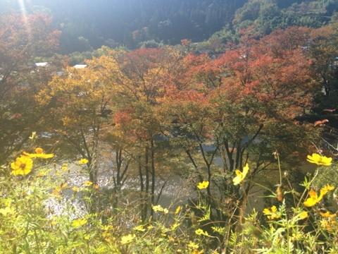秋川河岸2015