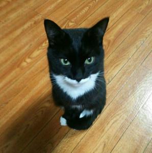 名前 白黒 猫
