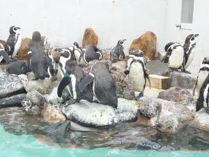 ペンギン達 (300x225)