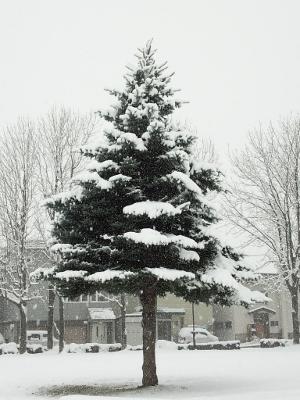 2015初雪3 (300x400)