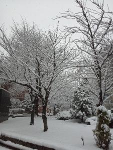 2015初雪2 (225x300)