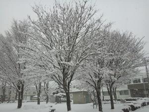2015初雪4 (300x225)