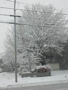 2015初雪1 (225x300)
