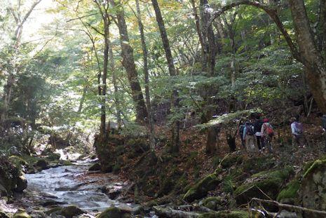 丹沢では珍しい渓畔林