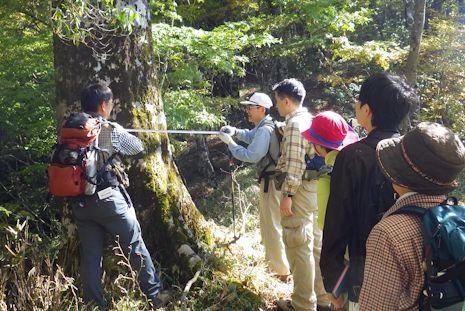 ブナ林の植生調査