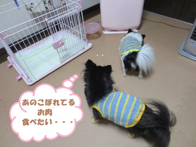 IMG_2184おこぼれ