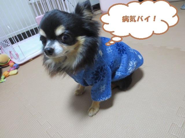 IMG_2164ふく71