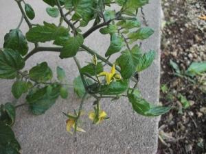 151029花