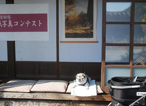 じいちゃんパグ、似合いすぎ(^^;)