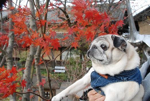 小布施の紅葉