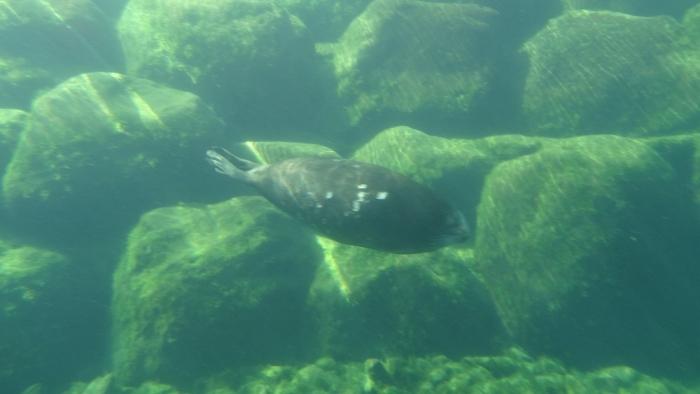 箱根園水族館 (5)