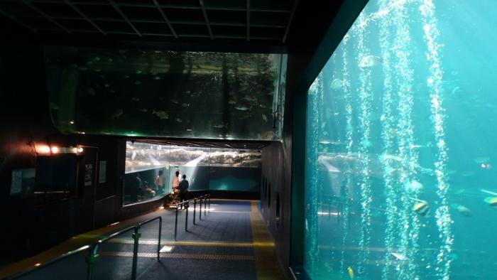 箱根園水族館 (3)