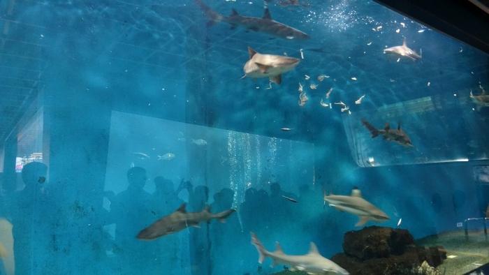 箱根園水族館 (9)