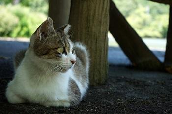 野良猫写真