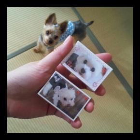 PhotoGrid_1446978830632.jpg