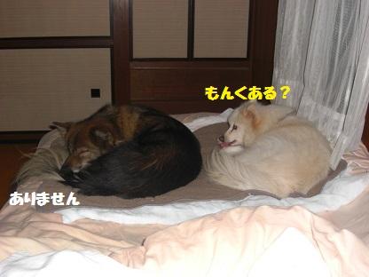 CIMG7464.jpg