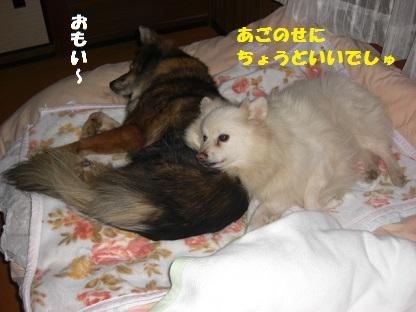 CIMG7579.jpg