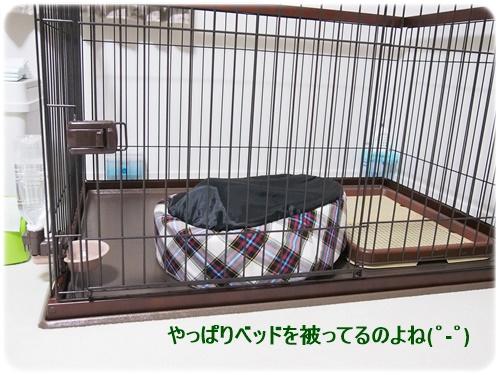 ショコラのベッド