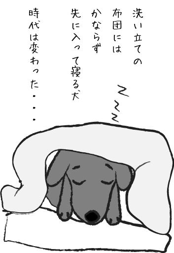 布団で寝る犬