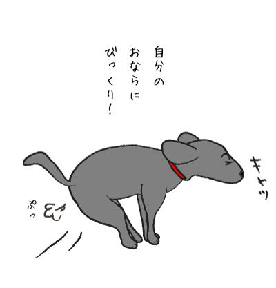 ビックリする犬