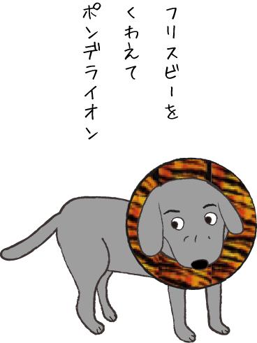 ポンデライオンな犬