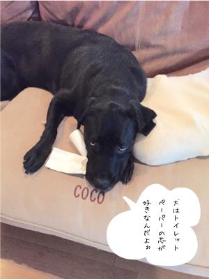 トレペの芯と犬