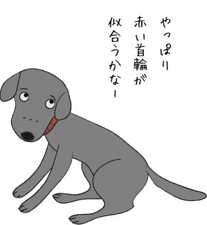 首輪が似合う犬