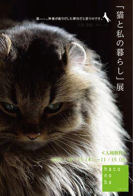 @haconoba_blog2.jpg