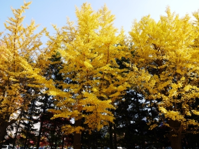 Sapporo201510-209.jpg