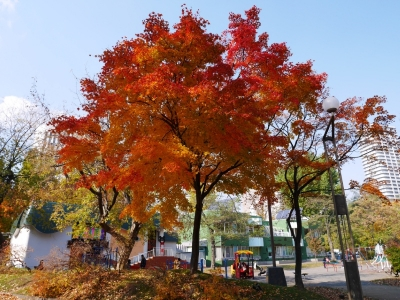 Sapporo201510-210.jpg