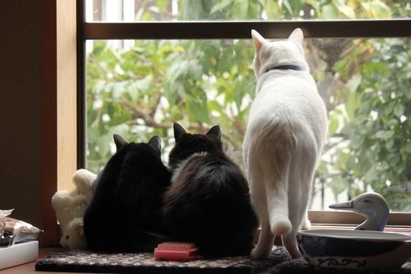 3兄弟の視線のさきは・・・