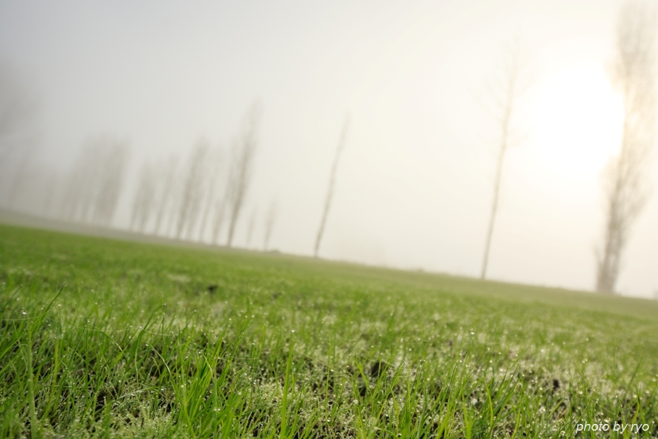 霧の七塚原高原 1