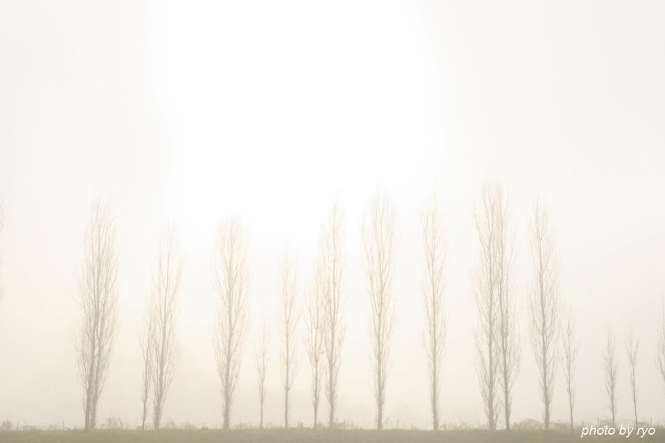 霧の七塚原高原 2