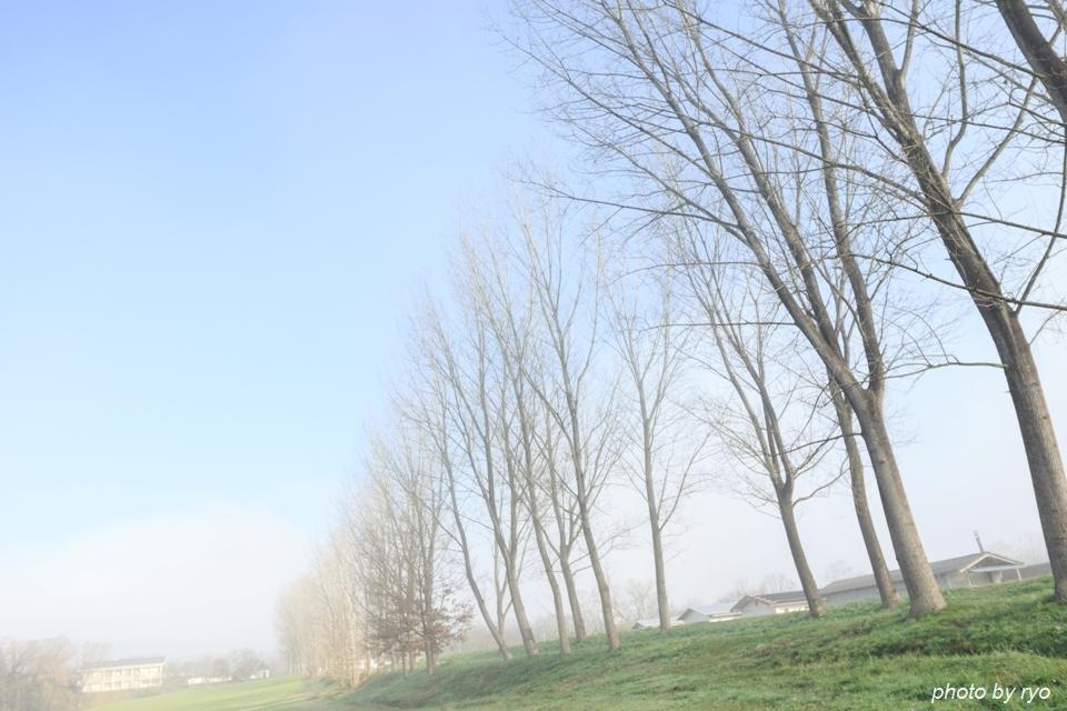 霧の七塚原高原 4